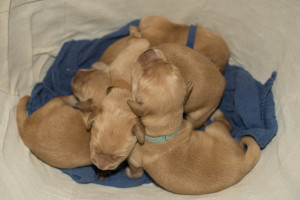 pups males 5 days 2